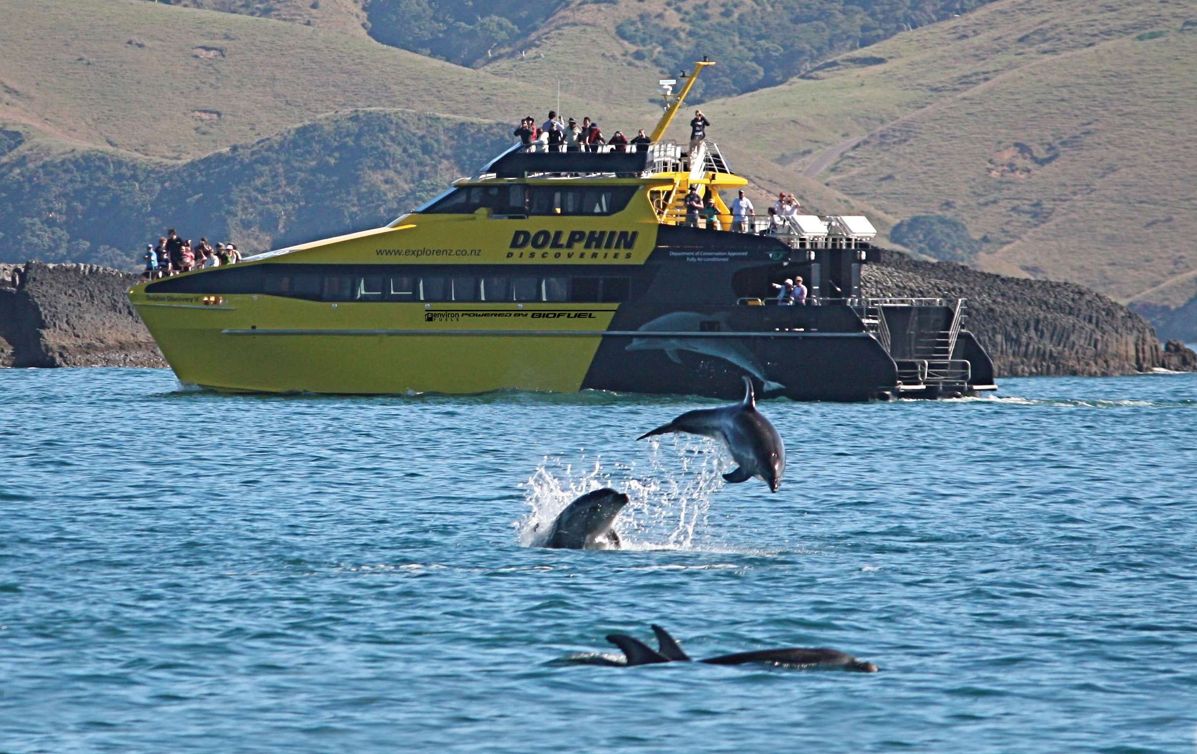 Explore NZ Dolphins - Study Rewards North Island